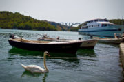 Skradin Swan _ Jamming Adventures Croatia